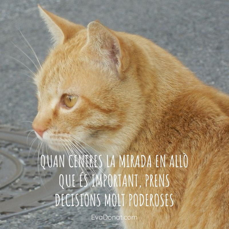 Quan centres la mirada en allò que és important, prens decisions molt poderoses. (1).png